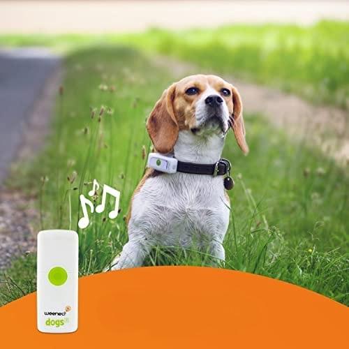 Read more about the article TOP 3 GPS para não perder o seu cão